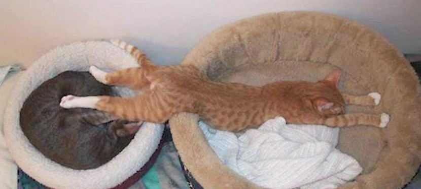 Funny Cat Sleeping Position