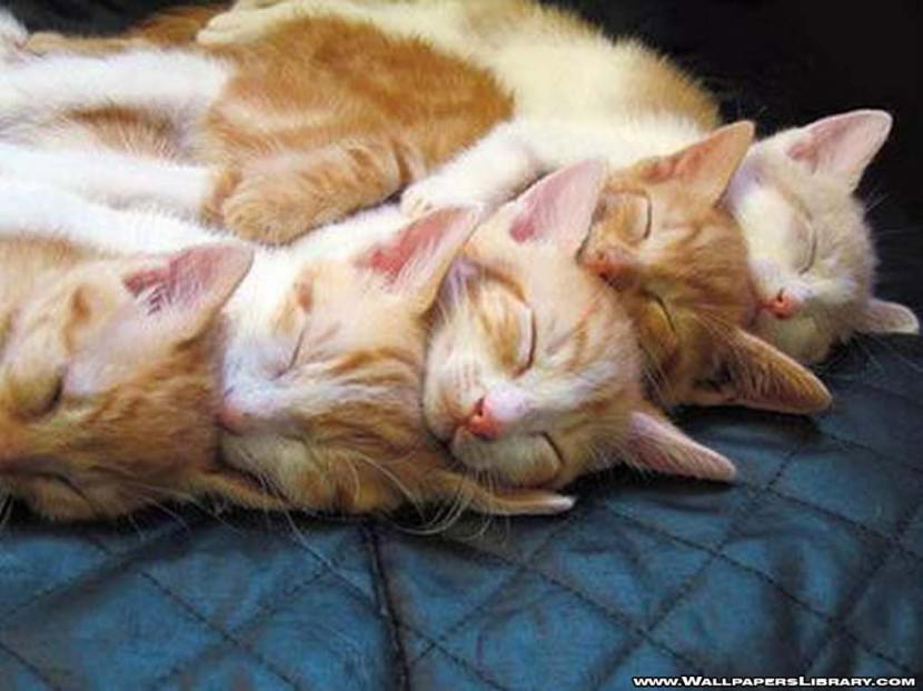 sleeping cats wallpaper funny