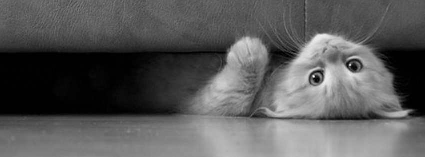 couch cat facebook cover