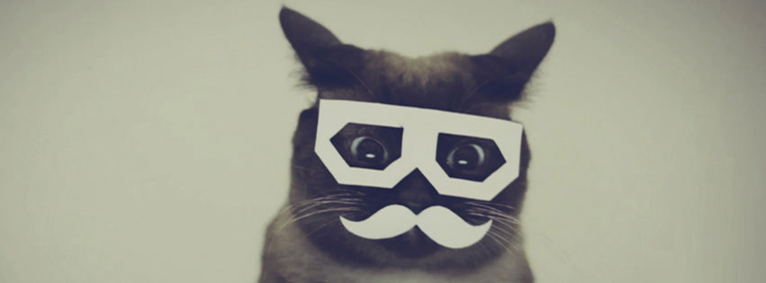 100 Cat & Kitten Facebook Timeline Cover Photo
