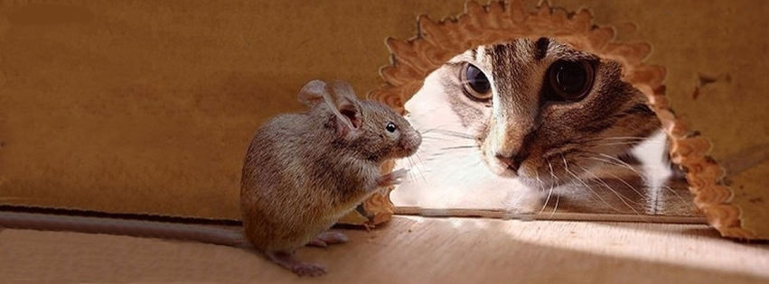 Cat Mouse Facebook Cover