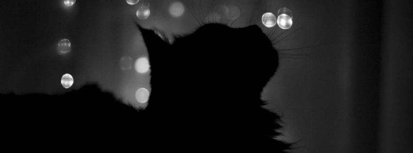 black cat facebook timeline cover