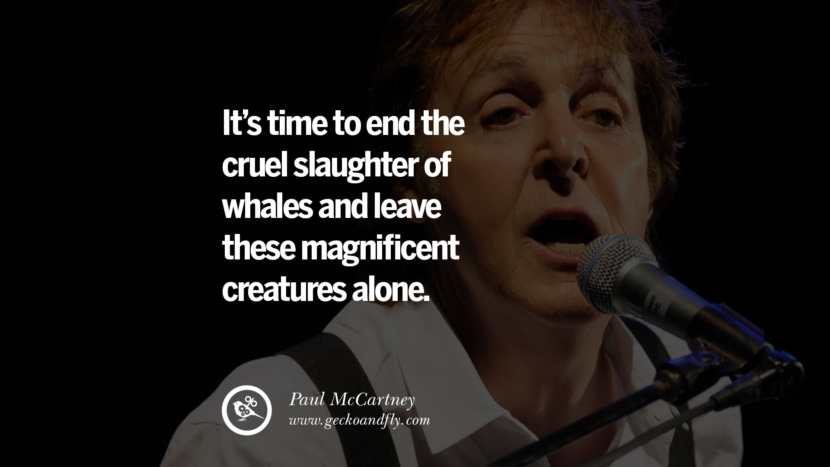 Quote by Paul McCartney on Vegetarianism, Life and Love It's time to end the cruel slaughter of whales and leave these magnificent creatures alone. best inspirational tumblr quotes instagram