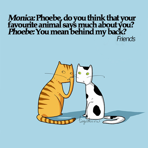 Monica: Phoebe, do you think that your favorite animal says much about you? Phoebe: You mean behind my back? 40 Funny Doodles For Cat Lovers and Your Cat Crazy Lady Friend grumpy tom talking nyan instagram pinterest facebook twitter comic pictures youtube