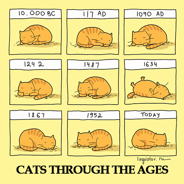 Cats through the ages 40 Funny Doodles For Cat Lovers and Your Cat Crazy Lady Friend grumpy tom talking nyan instagram pinterest facebook twitter comic pictures youtube