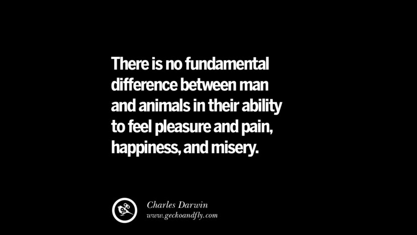 There is no fundamental difference between man and animals in their ability to feel pleasure and pain, happiness, and misery. - Charles Darwin
