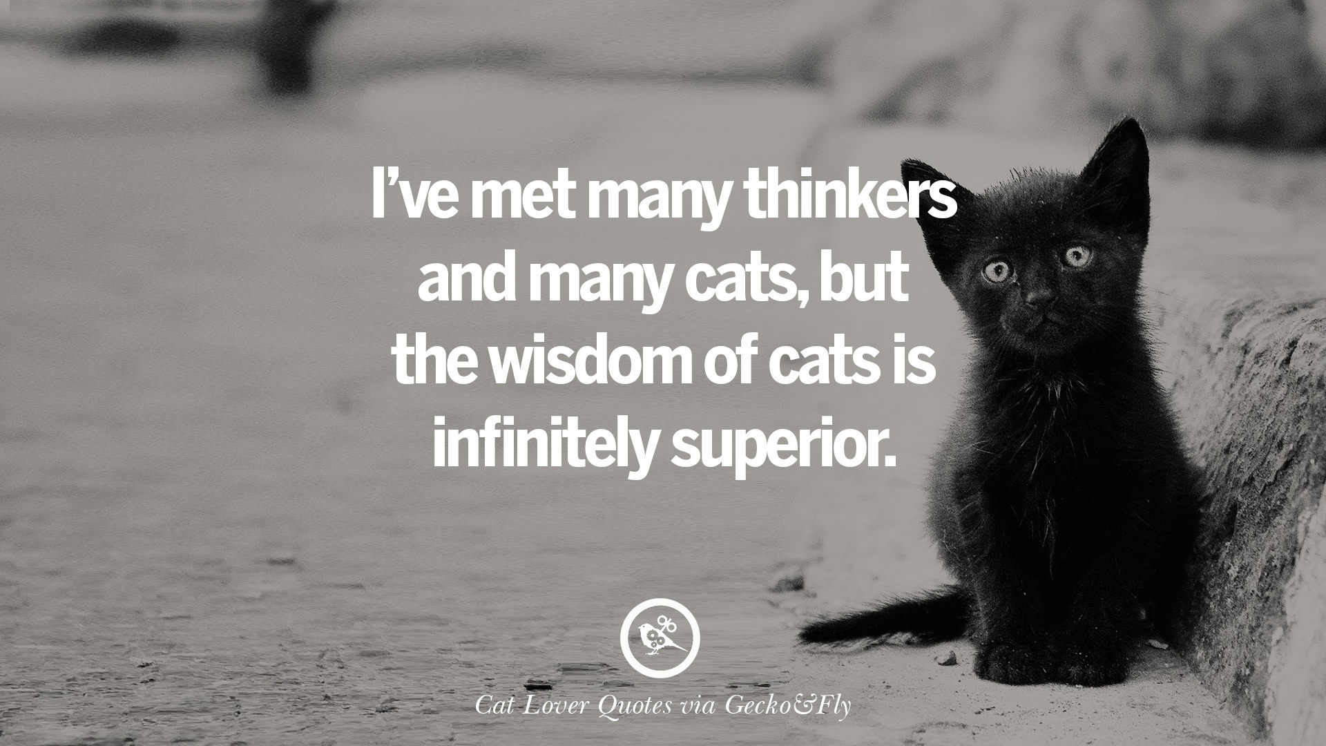 25 Cute Cat Images With Quotes For Crazy Cat Ladies ...