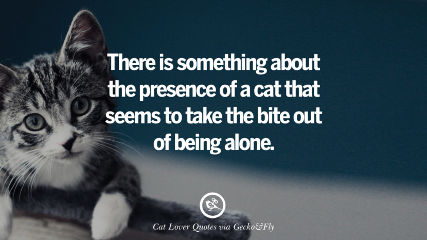 There is something about the presence of a cat that seems to take the bite out of being alone. Cute Cat Images With Quotes For Crazy Cat Ladies, Gentlemen And Lovers