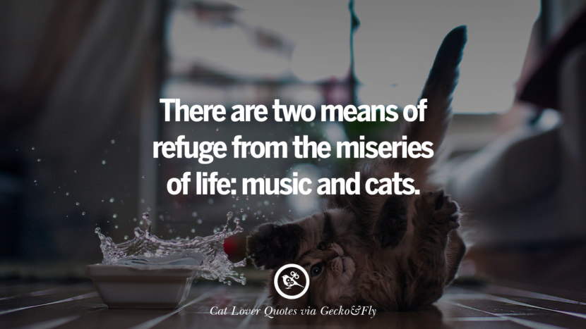 There are two means of refuge from the miseries of life: music and cats. Cute Cat Images With Quotes For Crazy Cat Ladies, Gentlemen And Lovers