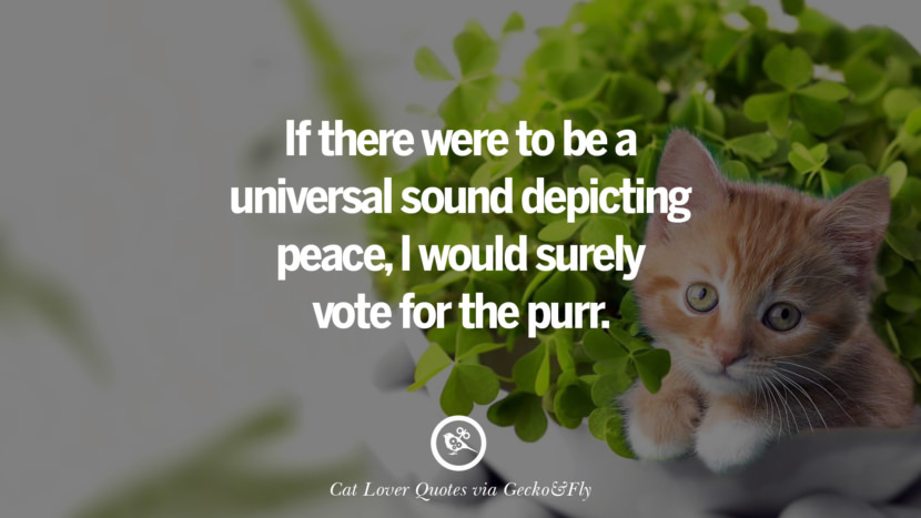If there were to be a universal sound depicting peace, I would surely vote for the purr. Cute Cat Images With Quotes For Crazy Cat Ladies, Gentlemen And Lovers
