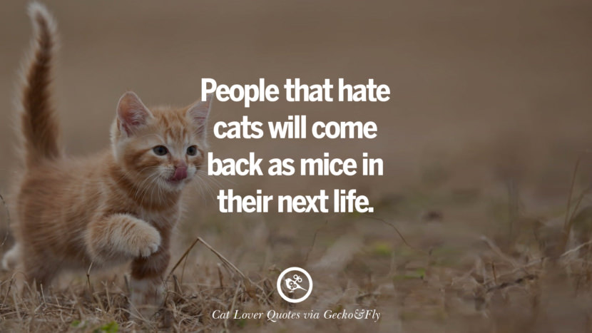 People that hate cats will come back as mice in their next life. Cute Cat Images With Quotes For Crazy Cat Ladies, Gentlemen And Lovers