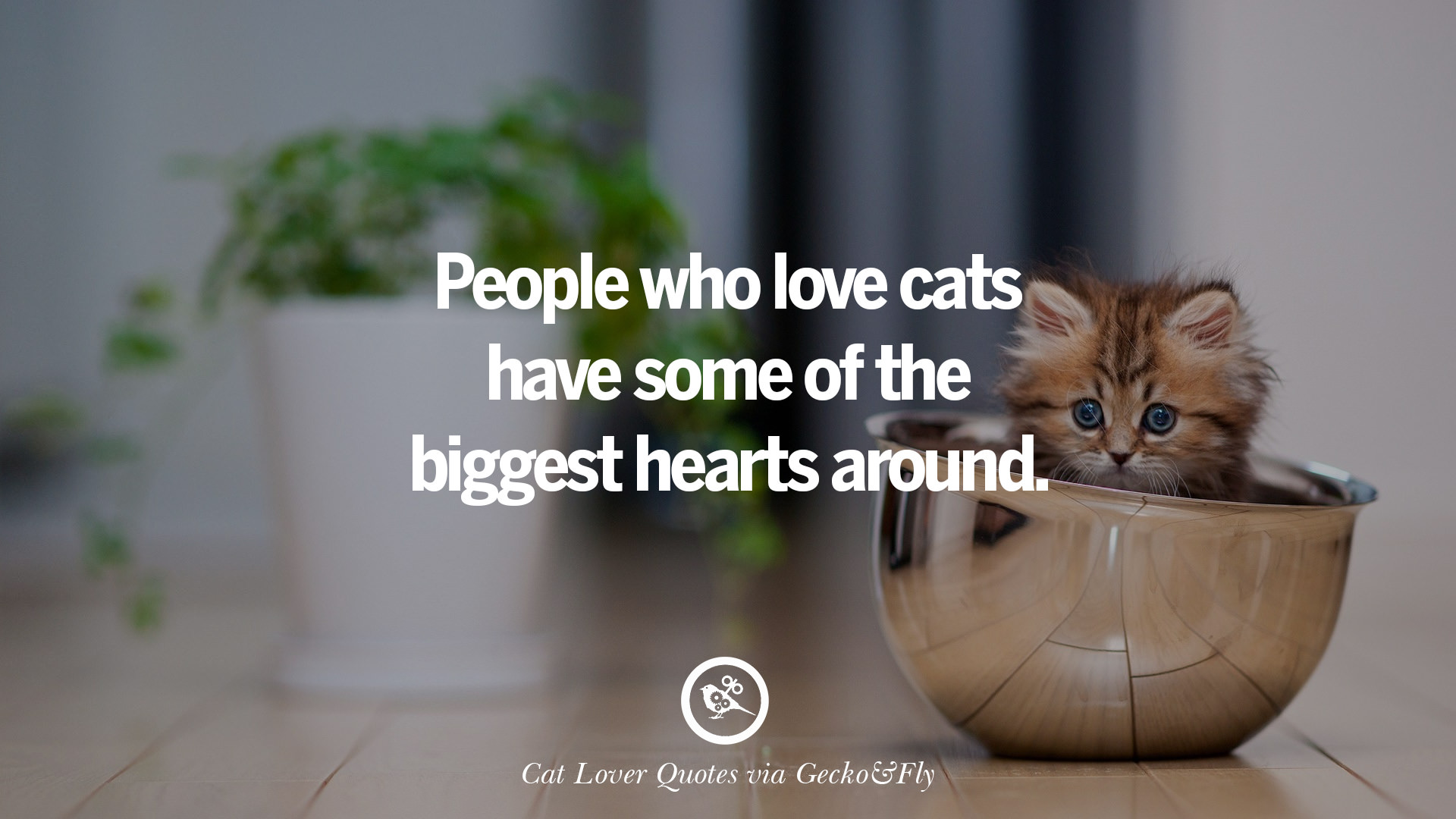 25 Cute Cat Images With Quotes For Crazy Cat Ladies Gentlemen And Lovers