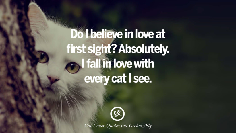 Do I believe in love at first sight? Absolutely. I fall in love with every cat I see. Cute Cat Images With Quotes For Crazy Cat Ladies, Gentlemen And Lovers