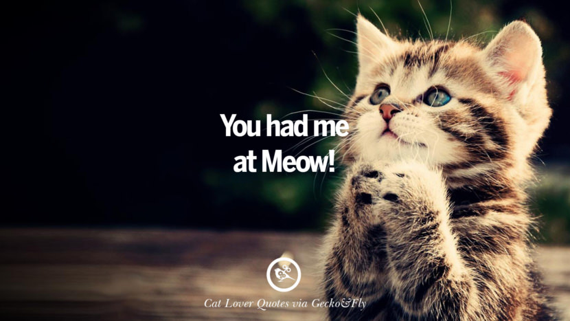 You had me at Meow! Cute Cat Images With Quotes For Crazy Cat Ladies, Gentlemen And Lovers