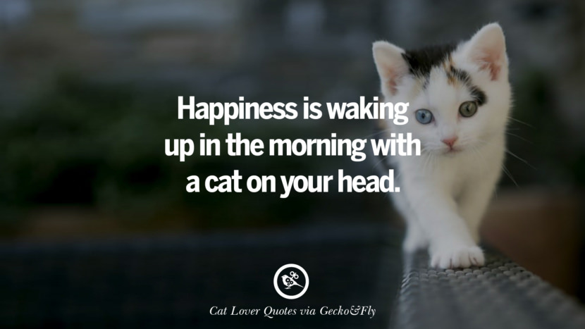 Happiness is waking up in the morning with a cat on your head. Cute Cat Images With Quotes For Crazy Cat Ladies, Gentlemen And Lovers
