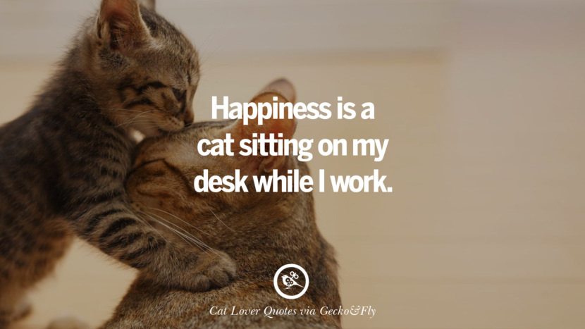 Happiness is a cat sitting on  my desk while I work. Cute Cat Images With Quotes For Crazy Cat Ladies, Gentlemen And Lovers