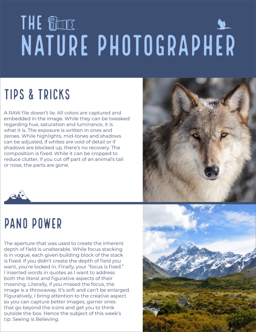 nature photography Free Newsletter Templates